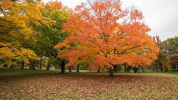 Autumn Trees in Lake Tahoe Reno Area - Best Seasons